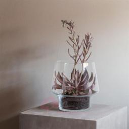 Стеклянная ваза для суккулентов 21 см Eva Solo \ 568188